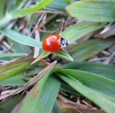 ladybug ^^