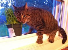 i think our cat has a grass problem - http://cutecatshq.com/cats/i-think-our-cat-has-a-grass-problem/