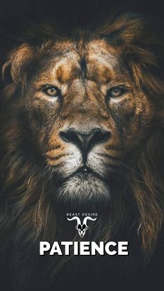 Hd Wallpaper Quotes, Beast Wallpaper, Motivational Quotes Wallpaper, Lion Wallpaper, Lion Quotes, Animal Quotes, Wolf Qoutes, Desire Quotes, Wild Animals Photography