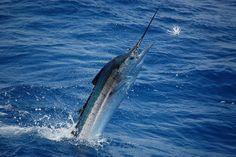 Deep ocean fishing