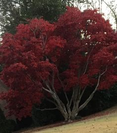 What is this tree?