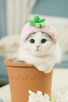 Costumes for Cats 1 - Gallery - Ace Times - Animals Cute Cats Cute Kittens, Cute Baby Cats, Beautiful Kittens, Kittens And Puppies, Cute Little Animals, Cute Funny Animals, Pretty Cats, Cute Dogs, Cute Babies