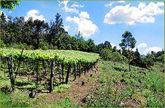 Imigração italiana no Rio Grande do Sul – Wikipédia, a enciclopédia livre