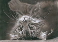 Fine Art and You: 20+ Beautiful Realistic Cat Drawings To inspire you