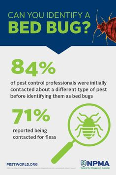 Would you be able to identify a bed bug if you came into contact with one? Many people mistake them for fleas! Pest Management, Bed Bugs, Pest Control, Fleas, People, People Illustration, Bed Bugs Treatment, Folk