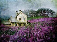 House among lupines