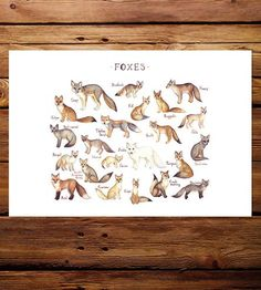 Foxes of the World Field Guide Art Print   Features Animal   Kate Dolamore Art   Scoutmob   Product Detail