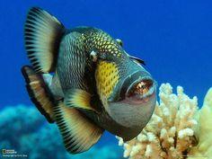 Beautiful fish - love the blue.