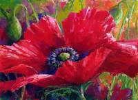 Red Poppy by Jennifer Bowman