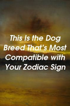 The most funny and brutal horoscope for all 12 zodiac signs 12 Zodiac Signs, Zodiac Sign Facts, Zodiac Quotes, Astrology Signs, Astrology Chart, Gemini Zodiac, Zodiac Love, Sagittarius Quotes, Astrology Zodiac