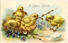 Adorable Easter Chicks Graphic - The Graphics Fairy