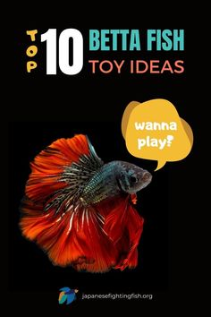 Imagine swimming around all day every day in an empty tank... doesn't sound all that fun does it?! Betta fish LOVE to play, so adding toys into their tank and taking time to play games with them is 100% necessary. Check out our post to discover our top 10 betta fish toys for great ideas on keeping a happy betta fish. happy betta fish, betta fish toys, betta fish play, betta fish tanks, betta toys, betta games, betta fish games, betta fish tricks, toys for bettas. Betta Fish Toys, Beta Fish, Planted Aquarium, Freshwater Aquarium, Exotic Pets, Fish Tank, Baby Animals, Fish Games, Top