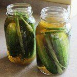 Refrigerator dill pickles made with a vinegar brine. No canning required dill pickles, crisp, delicious and easy. The best pickles you will ever make.