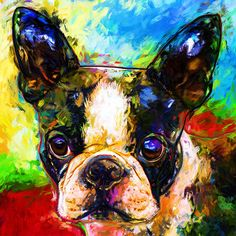 Pin by Heidi Engler on Boston Terriers Crazy Gracie in