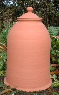 terracotta rhubarb forcing pot