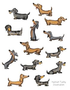 Dachshunds                                                       …