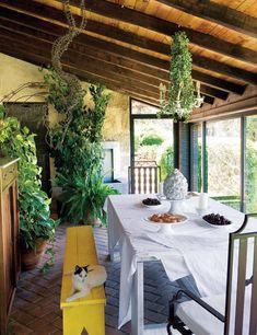 florida room plants