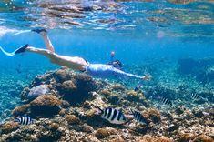 Best Snorkeling in t