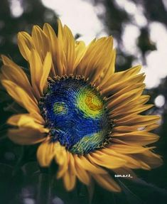 Inspired By Starry Night Vincent Van Gogh Pintura Wallpaper, Van Gogh Wallpaper, Van Gogh Drawings, Van Gogh Paintings, Sunflowers And Daisies, Van Gogh Sunflowers, Van Gogh Arte, Van Gogh Pinturas, Vincent Willem Van Gogh