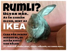 Our bunny, Eclipse in action Funny Photos, Funny Jokes, Funny Animals, Haha, Action, Memes, Bunny, Life, Funny Pictures