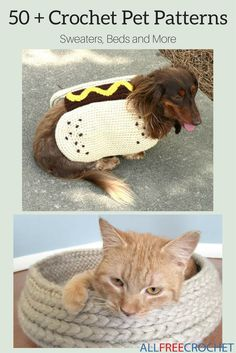 Dress your fur babies in style by creating your own unique styles with the help of these crochet patterns for pets All Free Crochet, Diy Crochet, Crochet Hats, Crochet Things, Crochet Ideas, Crochet Dog Sweater, Crochet Collar, Loom Knitting, Knitting Patterns