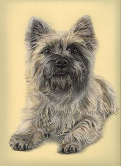 Pastel Pet Portraits - Cairn Terrier