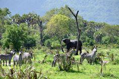 Selous Game Reserve Liwale, Tanzania