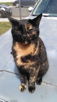 Strange color pattern on stray cat.