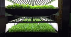 Using 95% less water and half the fertilizer of traditional farming, vertical farms bring sustainable produce to cities.