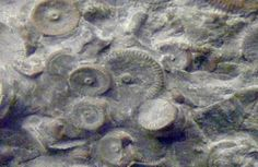 fossilized mechanics?  no but what is unexplained is the metallic pins at the centers of what science refers to naturally occurring organic formations from 450 million yrs ago.