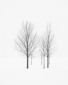 A minimalist black and white photograph of family of deciduous trees in a stark white field of snow. Inspired by the quiet winter of London, Ontario, Canada.br / br / - Open editionbr / br / - Location: London, Ontario, Canadabr / br / - Reminding you to take some time for inner peace and reflectionbr / br / Available to license via Getty Images:br / http://www.gettyimages.ca/detail/110256871