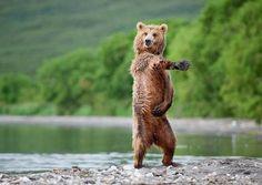 Bears Acting Human(@BearsActHuman)さん | Twitter