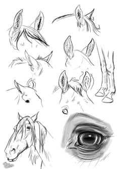 ear study : horse by blackseagull on deviantART Horse Drawings, Realistic Drawings, Animal Drawings, Art Drawings, Drawing Art, Animal Sketches, Drawing Sketches, Sketching, Horse Drawing Tutorial