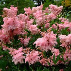 Terrace Garden, Garden Plants, Garden Landscaping, Home And Garden, Dream Garden, Beautiful Flowers, Bloom, Landscape, Gardening