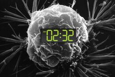Why working the night shift can pose a cancer risk - https://scienmag.com/why-working-the-night-shift-can-pose-a-cancer-risk/
