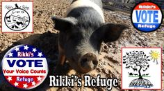 6/7/15 - Please VOTE & SHARE for RIKKI'S REFUGE in the Animal Rescue Site SHELTER CHALLENGE every day! Thank you! Vote here: http://www.shelterchallenge.com/web/charityusa/shelter-details?userId=53992&nomineeId=17448