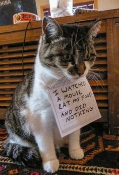 Cat shaming for failing to be a #mouser... they sometimes aren't the best form of pest control which is why ANT's is here for you!