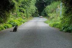 Cat Island, Tashirojima, a cat's paradise