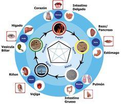 Cinco elementos - Órgãos - Vísceras e Sabores