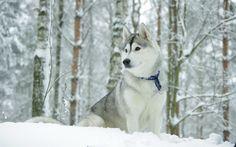 dog for desktops 2560x1600