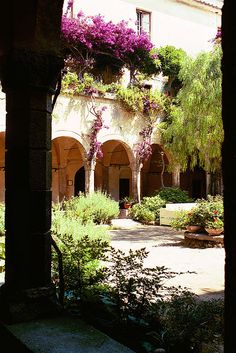 The Cloisters of San Francesco, Sorrento. Getting married under this tree x