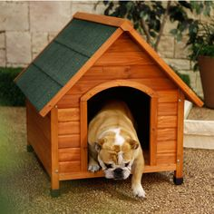 Have to have it. Ware Premium A-Frame Dog House $99.98