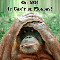 OH NO IT CANT BE MONDAY:-)