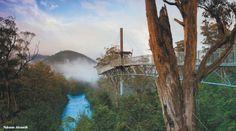 Tahune airwalk Tasmania - Google Search