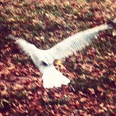 Free as a bird. Libre como un pájaro. #lavueltaalmundosinprisas #aroundtheworldunhurried #lavueltaalmundo #aroundtheworld #instagram #pajaro #bird #seagull #gabiota #libre #free #viaje #travel #trip #journey #viajero #traveler #nashdale #Orange #newsouthwales #nuevagalesdelsur #instagram @instagram