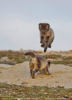Fox kits | Flickr - Photo Sharing!
