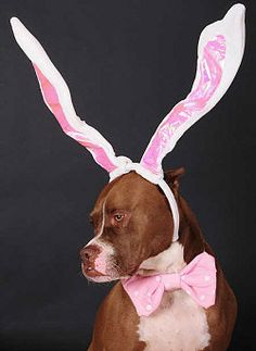 Easter Dog Outfits ( I could see Bucky in these lol)