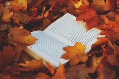 book in leaves