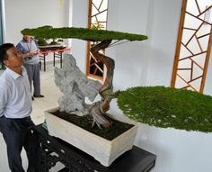 A bonsai that is designed to express strength and scale in Ninh Binh province, Vietnam. (Toshihiro Yamanaka)