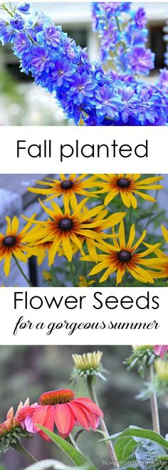 Sow your Seeds in Fall. Get a head start on summer by planting these flower seeds in Fall.